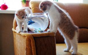 обои для рабочего стола 1920x1200 животные, разные, вместе, аквариум, котята, рыбка