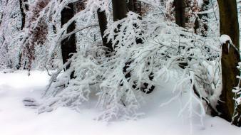 природа, зима, ветки, снег