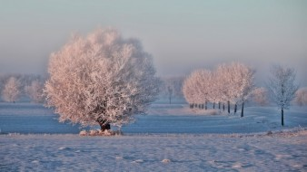 природа, зима, снег, иней, деревья