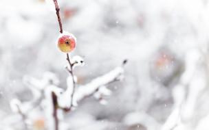 природа, деревья, снег, ветки, зима, яблоко