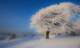 природа, зима, дерево, снег