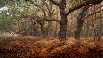 природа, лес, осень, туман