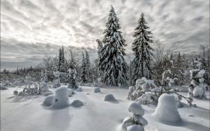природа, зима, деревья, снег
