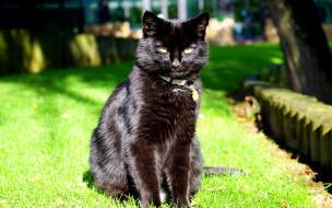 животные, коты, взгляд, сидит, черный, кот