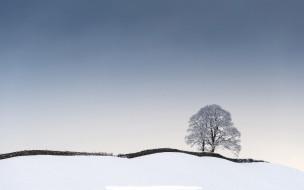 обои для рабочего стола 1920x1200 природа, деревья, зима, снег, изгородь, дерево