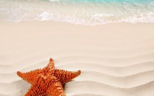 песок, море, берег, морская звезда