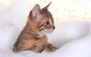 животные, коты, полосатый, котенок