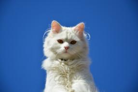 животные, коты, кот, глаза