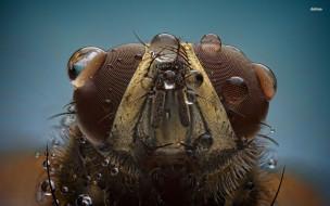муха, животные, насекомые, насекомое