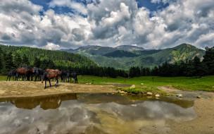 животные, лошади, горы, река