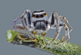 животные, пауки, паучок