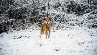 животные, собаки, снег, собака