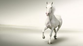 обои для рабочего стола 2400x1350 животные, лошади, лошадь, конь, белый, галоп
