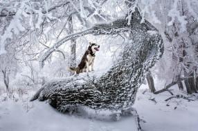 обои для рабочего стола 2048x1365 животные, собаки, зима, лес, взгляд, собака