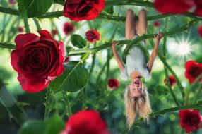 шипы, крик, розы, девочка