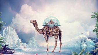 fantasy camel, фэнтези, фотоарт, фэнтази