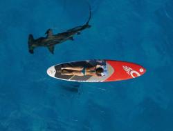 море, девушка, акула