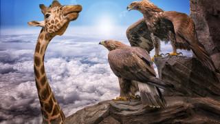 орлы, жирафы, облака