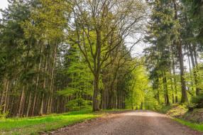 деревья, дорога, пейзаж, Лес