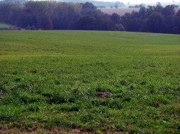 обои для рабочего стола 1920x1440 природа, луга, трава