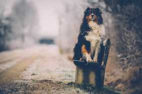 животные, собаки, собака, фон, взгляд