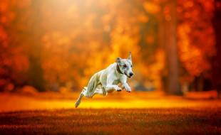 животные, собаки, друг, бег, собака