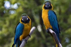 животные, попугаи, птичка