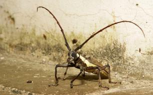 животные, насекомые, жук