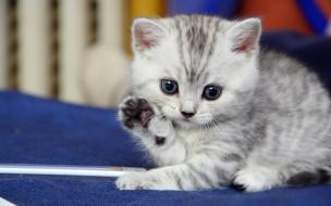 животные, коты, котёнок