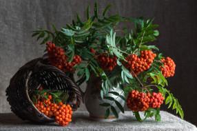 еда, натюрморт, рябина, осень, ягоды