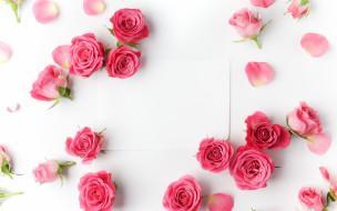 цветы, розы, бумага, бутоны