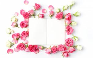 цветы, розы, бутоны, бумага