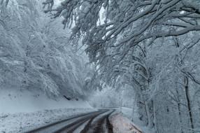 природа, дороги, деревья, дорога, снег, зима, лес