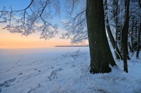природа, зима, сугробы, деревья, снег, закат