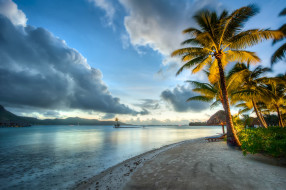 природа, тропики, море, пальмы