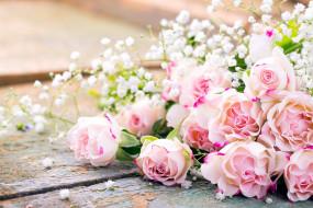 цветы, розы, бутоны, гипсофила, нежность