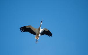 небо, птица, аист