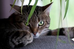 животные, коты, киса