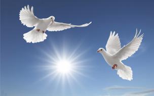 животные, голуби, птицы, небо, белые