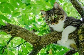 животные, коты, дерево, листва, на, дереве, кот, листья, кошка