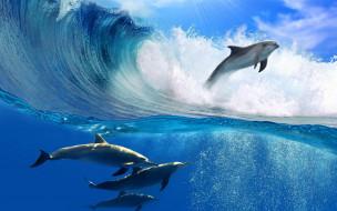 животные, дельфины, море, океан, вода, волна