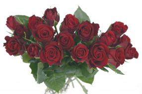 цветы, розы, бордо