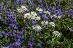 цветы, лцг