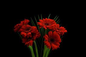 gerbera, цветы, герберы, букет