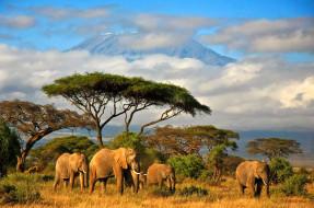 слоны, животные, африка