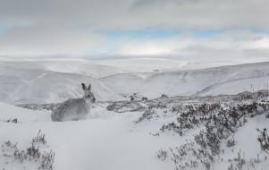животные, кролики,  зайцы, заец, снег