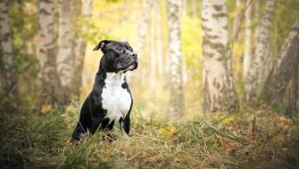 животные, собаки, собака, взгляд, осень, природа, друг