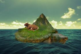 корова, Море, черепаха, остров
