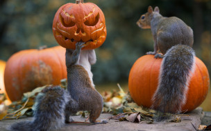 праздник, белки, Halloween, тыквы
