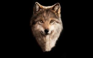 волк, рисованное, животные,  волки, голова, черный, фон, wolf